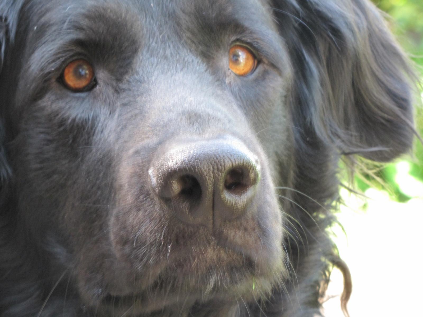 Therapien Tierheilpraxis Bottwartal